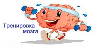 Мозг развивается и эволюционирует в период всей жизни. Способы продления жизни
